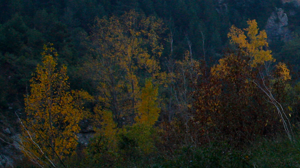 Pyrenees-Colours