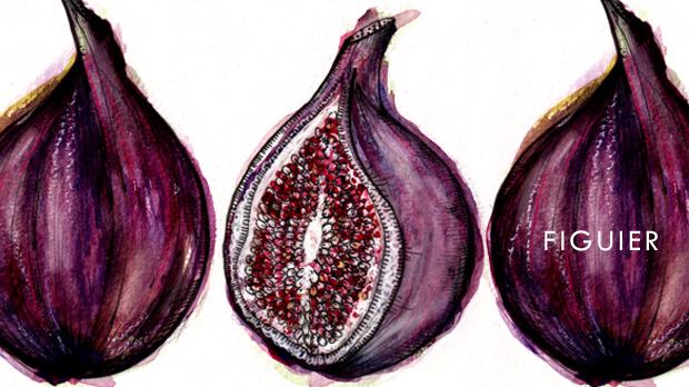 Vela-aromatica-higuera