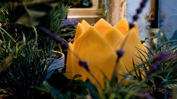 Yellow-Lotus-Candle