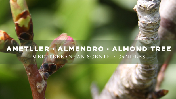 Almond-scented-candles