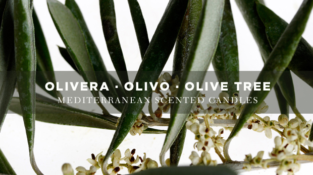 olive-tree-scented-candle