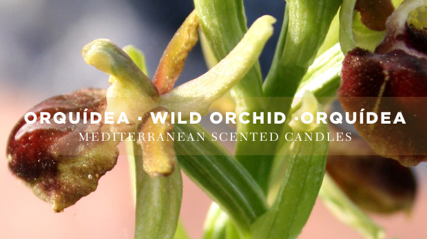 wild-orchid-scented-candle